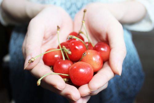 ir vyšnios,raudona,vaisiai,saldus,rūgštus,vasara,pavasaris,žmonės,ranka,turėti,ištiesti,dovanos,maistas,apartamentai