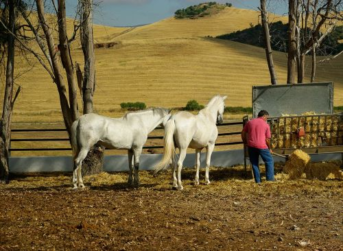 andalusia horses standard