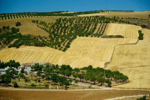 andalusia spain olive trees