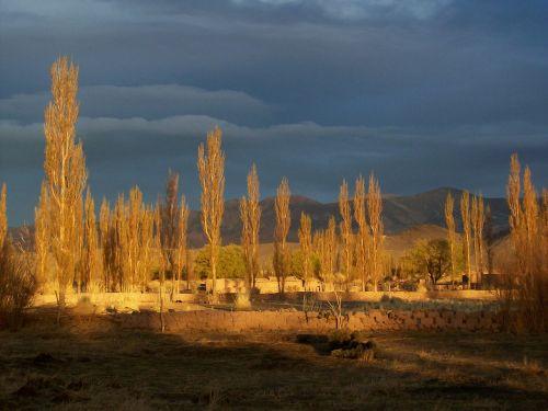 andean landscape argentina tree