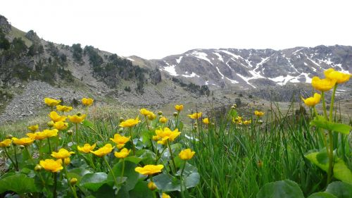 andorra flowers mountains