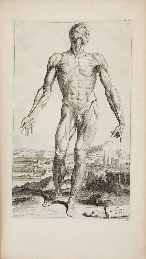 andreas vesalius 1725 opera omnia anatomica chirurgica