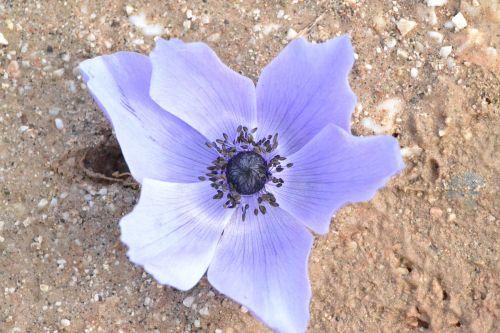 anemone browse antalya