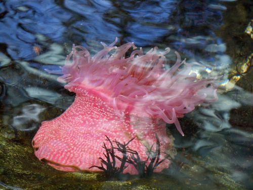 anemones marine life aquarium
