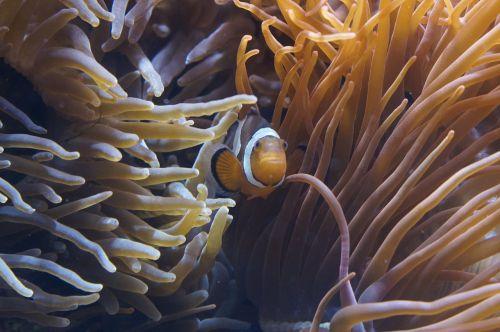 anemones sea anemones underwater world
