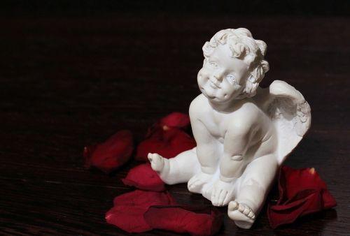 angel angel wings sweet