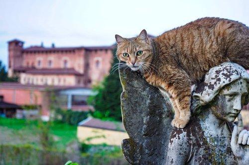 angel  cat  cat european