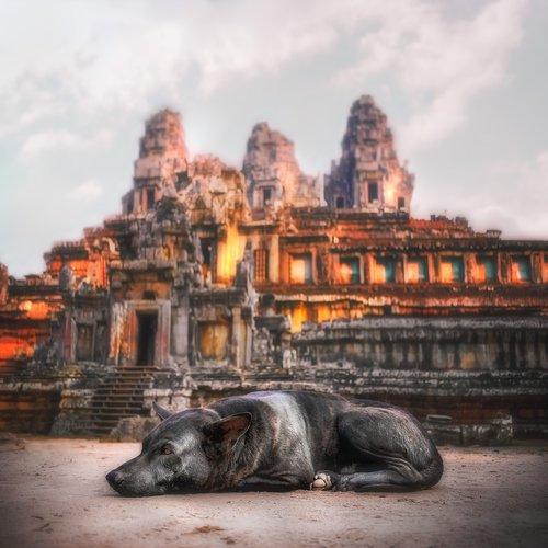 angkor wat  guard dog  temple
