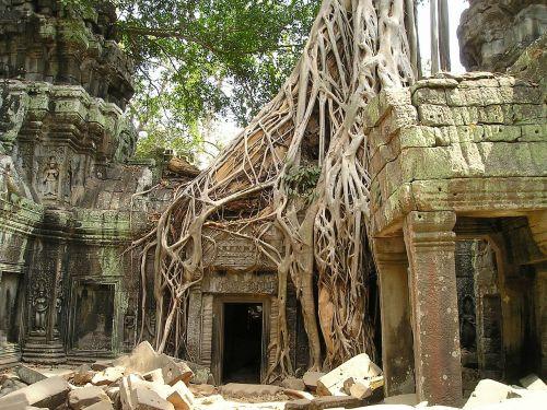 angkor wat root cambodia