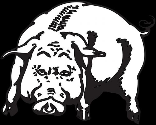 angry pig animal