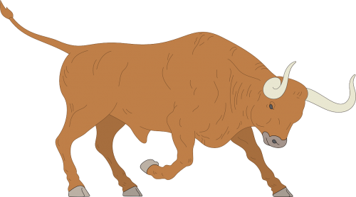 angry charge bull