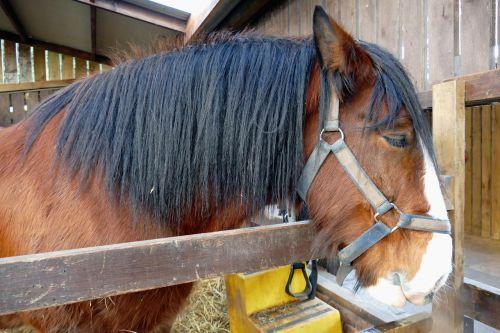 animal horse mammal