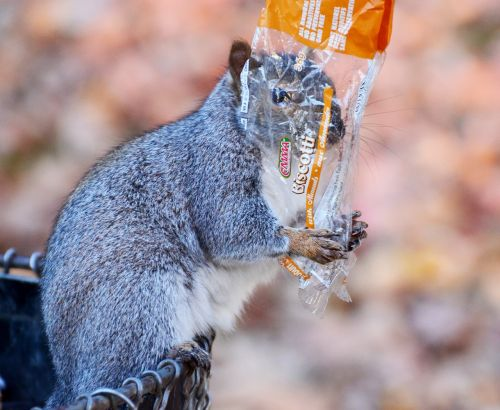 squirrel cookies animal