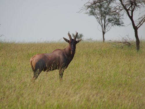 animal africa savannah