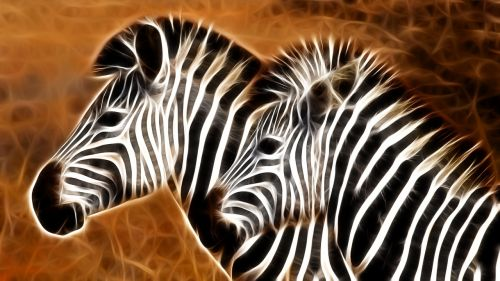 animal stripes animals