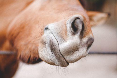 animal zoo horse