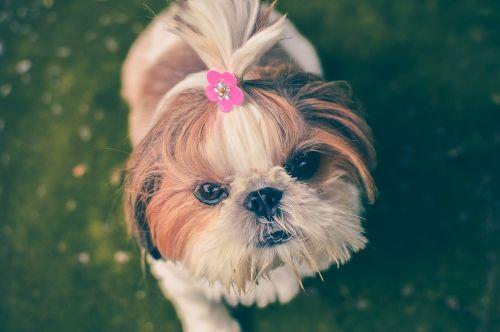 animal dog pet