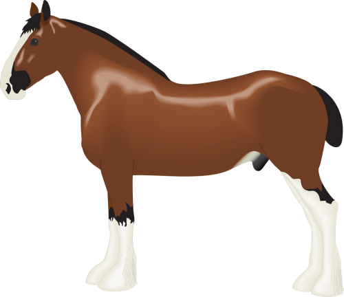 animal clydesdale draft