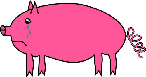 animal pig sad