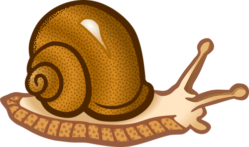 animal molluscs snail