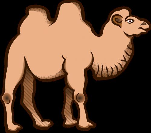 animal animals bactrian camel