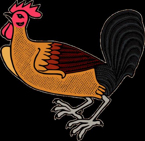 animal bird chicken