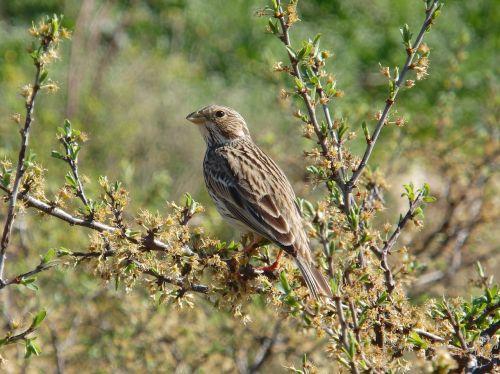 animal bird wild