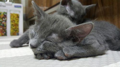 animal cat companion