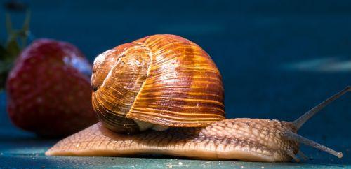 animal snail shell