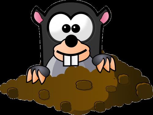 animal mole underground