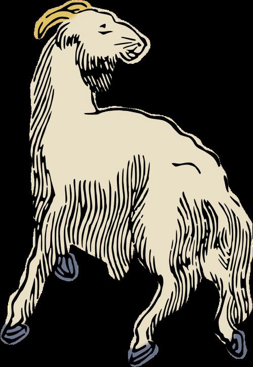 animal sheep woodcut