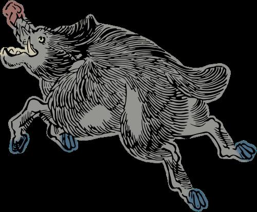 animal boar pig