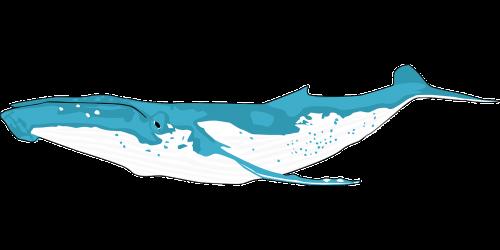 animal ocean whale