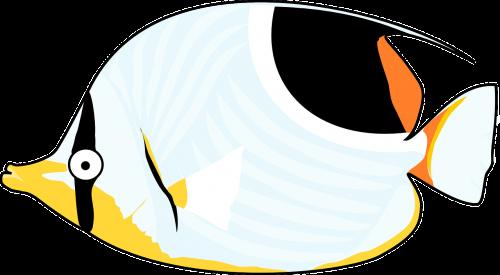 animal fish ocean