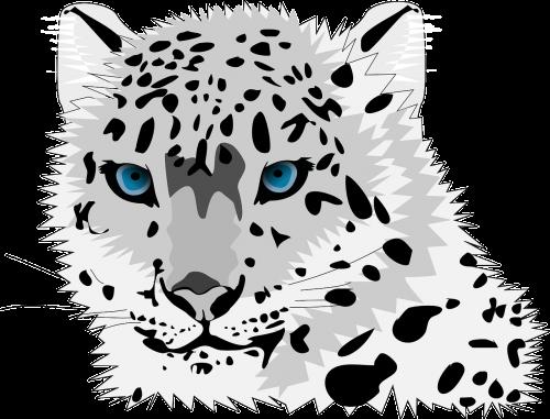 animal cat leopard