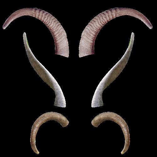 animal horns antlers