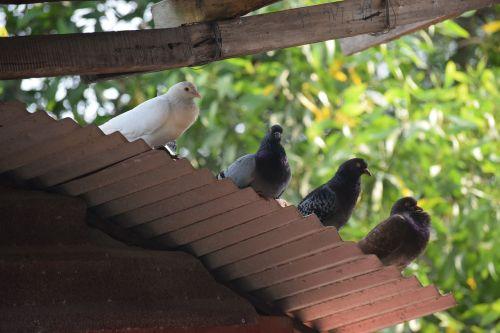 animal dove dong nai province