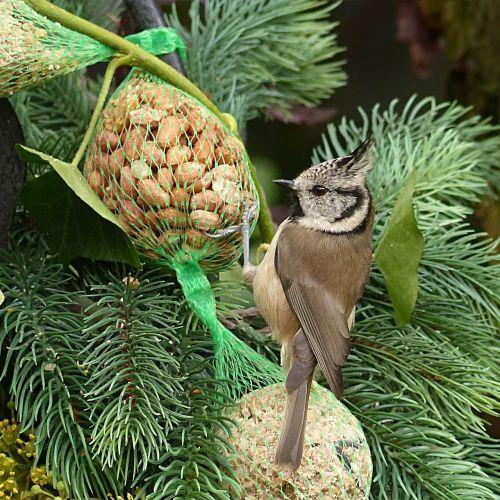 animal bird tit