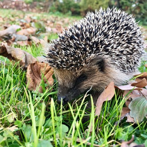 animal nature wildlife
