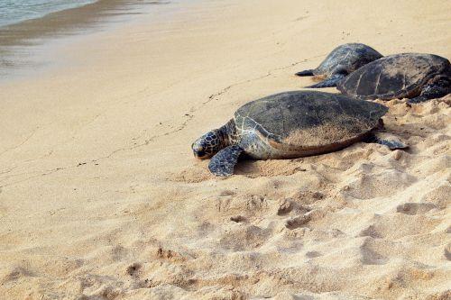 animal beach nature
