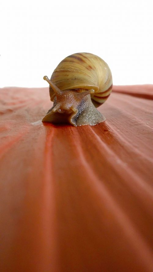 animal gastropod macro