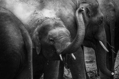 animal close-up elephant trunk