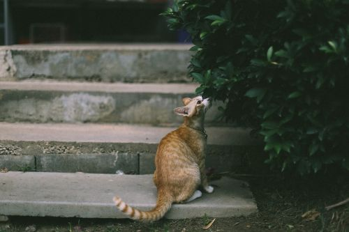 animal animal photography blur