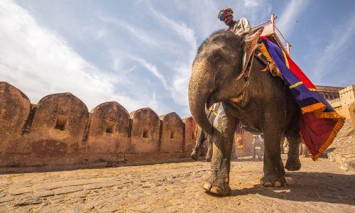 animal elephant fort