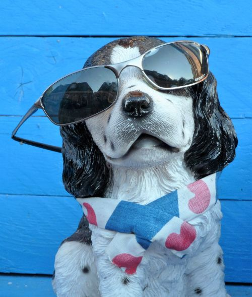 animal dog sunglasses