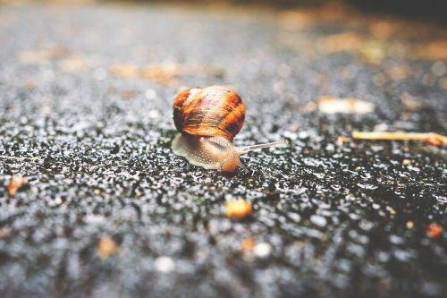 animal gastropod mollusk
