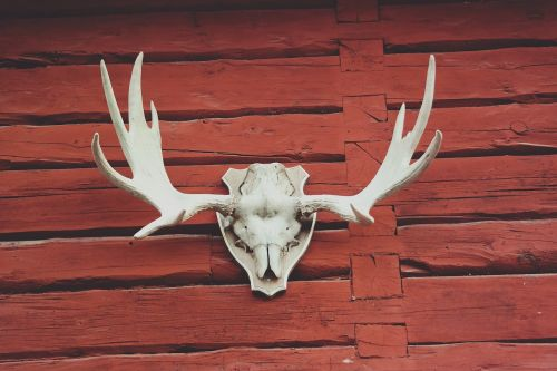 animal antlers architecture