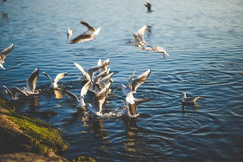 animal birds fly