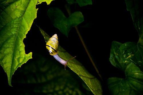 animal gastropod leaves
