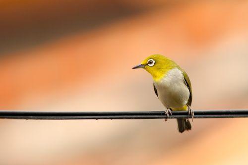animal bird macro